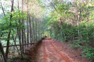 Timber Investment Tract Near Sebastopol, MS - Newton County MS