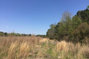 Arrowhead Road Farming and Hunting Tract - Darlington County SC