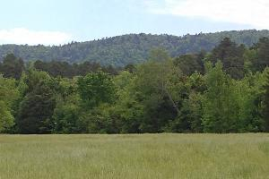 Ouachita Mountains Farm and Hunting Ranch in Montgomery, AR (23 of 44)