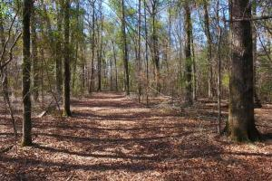 Photo 2 of 21  ·  2 of 21 Photos for Oakmulgee Creek Sprott Tract in Perry County, AL