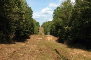 Photo 17 of 21  ·  17 of 21 Photos for Oakmulgee Creek Sprott Tract in Perry County, AL