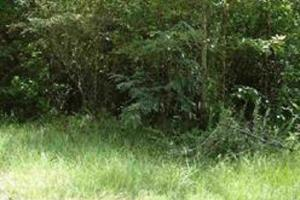 Developmental Lots Priced to Sell - Hinds County MS