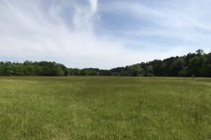 Pasture & Timber Home Site or Development in Livingston, LA (2 of 43)
