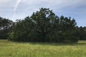 Pasture & Timber Home Site or Development - Livingston Parish LA