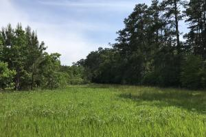 Pasture & Timber Home Site or Development in Livingston, LA (14 of 43)