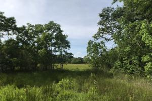 Pasture & Timber Home Site or Development in Livingston, LA (42 of 43)