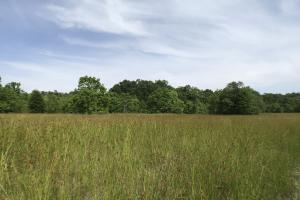 Pasture & Timber Home Site or Development in Livingston, LA (5 of 43)