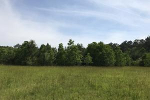 Pasture & Timber Home Site or Development in Livingston, LA (11 of 43)