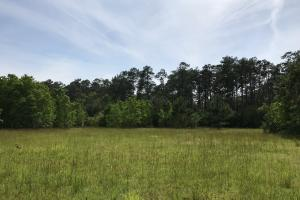 Pasture & Timber Home Site or Development in Livingston, LA (15 of 43)