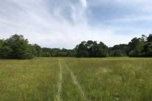 Pasture & Timber Home Site or Development in Livingston, LA (7 of 43)