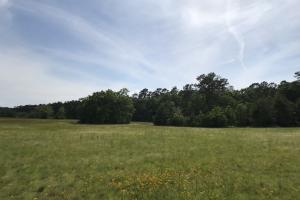 Pasture & Timber Home Site or Development in Livingston, LA (4 of 43)