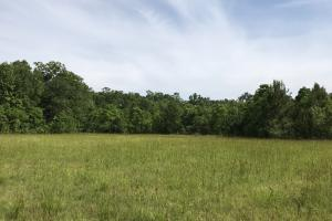 Pasture & Timber Home Site or Development in Livingston, LA (12 of 43)