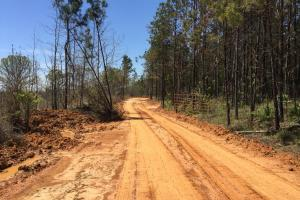 Awesome Timber & Recreational Tract - Attala County MS