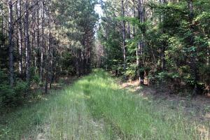 Diversified Timber and Recreational Land - Leake County MS