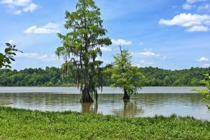 Sand Island River Lot #6 - Wilcox County AL
