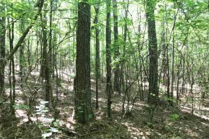 Buck Hill Tract - Lamar County AL