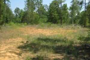 <p>Potential food plot area near the rear property line.</p>