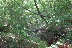 <p>Seasonal drainage down stream from homesite.</p>