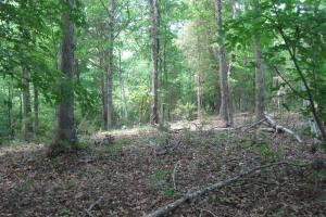 <p>Level building site with mature hardwoods, view down into creek drainage.</p>