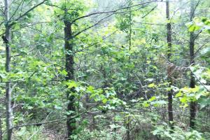 Hells Creek Timber Investment Tract - Lamar County AL