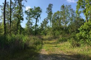 Bayou Coden Homesite or Development Tract in Mobile, AL (3 of 8)