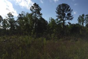 Bayou Coden Homesite or Development Tract in Mobile, AL (5 of 8)