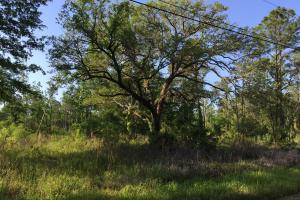 Bayou Coden Homesite or Development Tract in Mobile, AL (2 of 8)