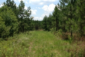 Lyons Recreational Timber Investment - Toombs County GA