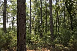 Deer Creek Lake Hunting and Timber Investment in Washington, AL (19 of 59)