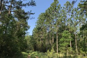 Deer Creek Lake Hunting and Timber Investment in Washington, AL (55 of 59)