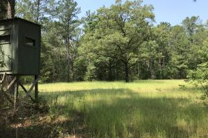 Deer Creek Lake Hunting and Timber Investment in Washington, AL (12 of 59)