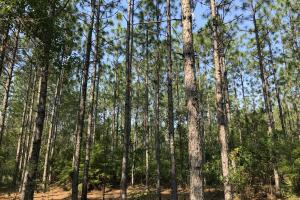 Deer Creek Lake Hunting and Timber Investment in Washington, AL (45 of 59)