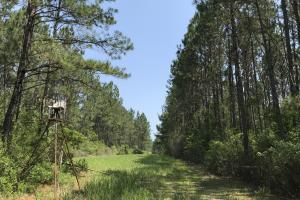 Deer Creek Lake Hunting and Timber Investment in Washington, AL (51 of 59)