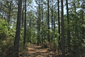 Deer Creek Lake Hunting and Timber Investment in Washington, AL (37 of 59)