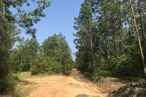 Deer Creek Lake Hunting and Timber Investment in Washington, AL (58 of 59)