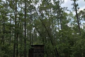 Deer Creek Lake Hunting and Timber Investment in Washington, AL (56 of 59)