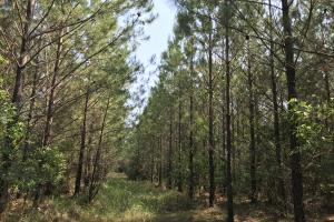 Deer Creek Lake Hunting and Timber Investment in Washington, AL (44 of 59)
