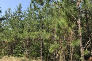 Deer Creek Lake Hunting and Timber Investment in Washington, AL (42 of 59)