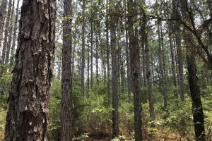Deer Creek Lake Hunting and Timber Investment in Washington, AL (24 of 59)