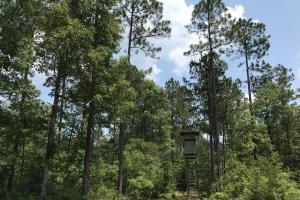 Deer Creek Lake Hunting and Timber Investment in Washington, AL (22 of 59)