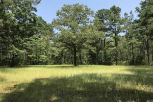 Deer Creek Lake Hunting and Timber Investment in Washington, AL (23 of 59)