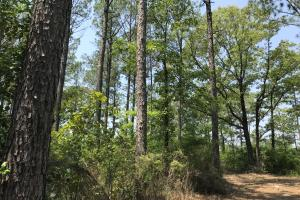 Deer Creek Lake Hunting and Timber Investment in Washington, AL (36 of 59)