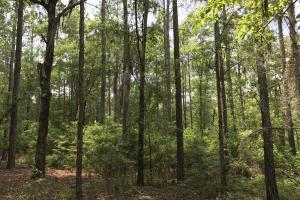 Deer Creek Lake Hunting and Timber Investment in Washington, AL (25 of 59)