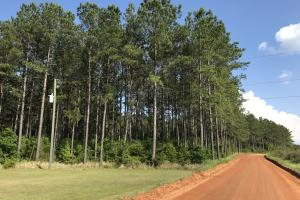 Roberts Road Kelly Trail Timber Hunting Development Tract - Mobile County AL