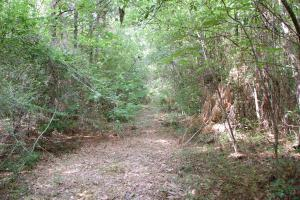 <p>Old ATV Trail</p>