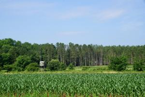 Grace Farm Timber Investment and Hunting - Talladega County AL