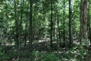 Pelahatchie Timber and Hunting Tract - Rankin County MS