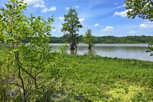 Sand Island River Lot #7 in Wilcox, AL (2 of 9)