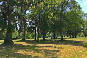 Sand Island River Lot #7 in Wilcox, AL (3 of 9)