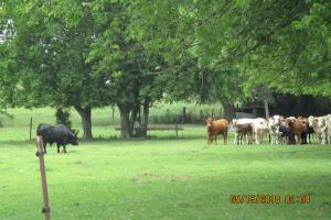 Jakin Pasture/Farmland - Early County GA